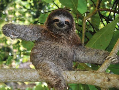 costa_rica_sloth_6